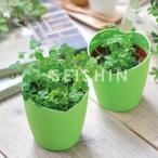 ギフトに 四つ葉のクローバー栽培セット(ラッピング付)