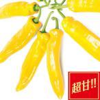 野菜の苗/フルーティーピーマン:スイートパレルモゴールド3号ポット