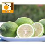 果樹の苗/レモン:カリスティーニ5号ポット
