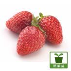 ショッピングアルビオン 野菜の苗/イチゴ:アルビオン3号ポット 2株セット