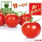野菜の苗/高リコピントマト:LEON(レオン)3号ポット 2株セット