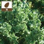 Yahoo!園芸ネットまき時過ぎた為セール ケール:サイベリアン 野菜タネ