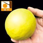 果樹の苗 レモン ポンテローザ3号ポット