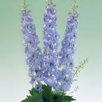 草花の苗/デルフィニウム:F1オーロラ ラベンダー3.5号ポット 2株セット