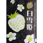 野菜の苗/イチゴ:白雪姫(しらゆきひめ)3号ポット 2株セット