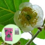 果樹の苗/キウイの花粉1袋と花粉増�
