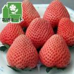 野菜の苗/いちごのかんたん栽培セット(鉢無しでできる):イチゴ:とうくん(桃薫)