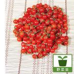 野菜の苗/マイクロトマト・レッド3号ポット  2株セット