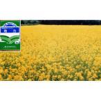 景観緑肥用シロカラシ 地力 1kg
