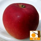 Yahoo!園芸ネット果樹の苗/棚卸セール リンゴ:コウギョク(紅玉)4〜5号ポット(訳あり)