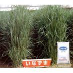 棚卸セール 飼料用イタリアンライグラス タネ 秋まき(9月下旬〜11月中旬) 牧草種子:イタリアン いなずま 1kg