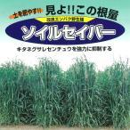 2アール分 春、秋まき タネ 牧草種子:エン麦 ソイルセイバーオーツ 1kg