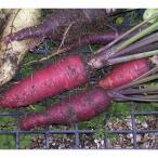 4〜5月・8〜10月まき 野菜タネ ニンジン:紫ニンジン パープルスイート