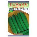 野菜タネ キュウリ:ピノキオ(ミニきゅうり)*