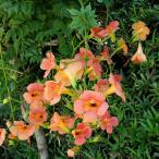 庭木として育てやすい品種