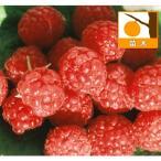 果樹の苗/木いちご(キイチゴ):ラズベリー レッドジュエル3.5号ポット