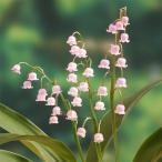 草花の苗/ドイツすずらん:ピンク1芽入り 3号ポット2株セット