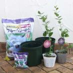 果樹の苗/ブルーベリー栽培セット:あまつぶ星とおおつぶ星4〜4.5号ポット