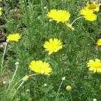 ハーブ苗 花と葉を、乾燥させてリース、ポプリに