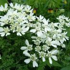 ホワイトガーデンに 大人気の白い花