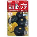 サカタ 野菜タネ かぼちゃ:ミニ栗かぼちゃ栗坊(くりぼう)