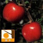 果樹の苗/リンゴ:シナノスイート4号ポット
