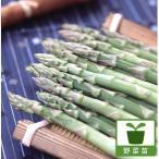 野菜の苗/アスパラガス養生株3.5号ポット