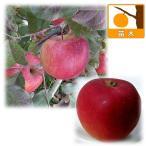 果樹の苗/リンゴ2種セット:ふじ(富士)と紅玉(こうぎょく)