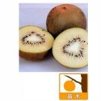 果樹の苗/キウイ2種受粉樹セット:�