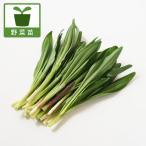 野菜の苗 / 行者ニンニク(アイヌネギ)1芽植え3号ポット2株セット