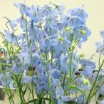草花の苗/デルフィニウム:アクティア3.5号ポット3株セット