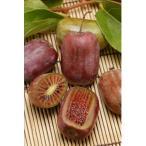 果樹の苗/極甘サルナシ:紫香(しこう)4号ポット