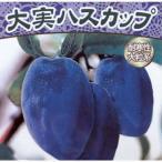 果樹の苗/大実ハスカップ(ハニーベリー)4.5号ポット
