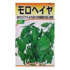 野菜タネ モロヘイヤ