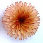 草花の苗/ポットマリーゴールド:まどかチョコクリームカップケーキ3.5号ポット