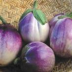 イタリアの伝統的な茄子 野菜タネ ナス:ロッサ ビアンコ