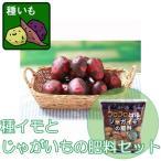 野菜の苗 / ジャガイモ:デストロイヤー500g入り1袋&じゃがいもの肥料セット