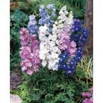 草花の苗/おためし4種12株セット:デルフィニウム・マジックフォンテン