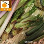 野菜の苗/タラノキ(たらの芽)3.5号ポット