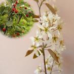 花木 庭木の苗/ジューンベリー:バレリーナ4.5号ポット