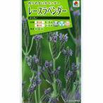タキイ 花タネ ラベンダー:レースラベンダー オリガノの種