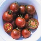 濃えんじ色のおいしいミニトマト 春まき 野菜タネ トマト:ブラックチェリートマト