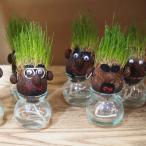 観葉植物/ヘアーラボ・ボーイズ(hair LABO boys)底面給水タイプ 3組セット