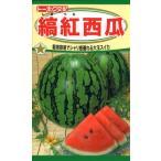 東北植苗 縞紅西瓜