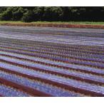 農業用マルチシート 黒ホールマルチ 幅95cm×長さ200m×孔60mm 規格9230 5本セット