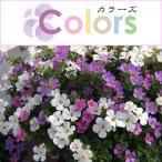 草花の苗 カラーズ ステラ バコパ Aミックス3.5号ポット