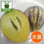 野菜の苗/19年5月中旬予約 ペピーノ:ロイヤルカスタード4号ポット