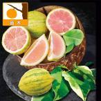 果樹の苗/17年10月中旬予約 レモン(斑入り):ピンクレモネード3号ポット