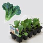 野菜の苗 おくだけ菜っぱ10連パック 小松菜よかった菜