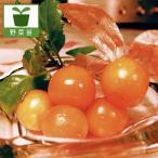 野菜の苗 食用ホオズキ オレンジチェリー3号ポット